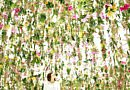 Teamlab / Floating Garden [VIDEO]