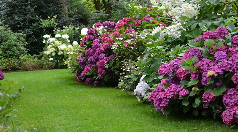 Garden Photo Of The Day
